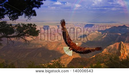 Eagle takes flight over Grand Canyon USA 3D Render
