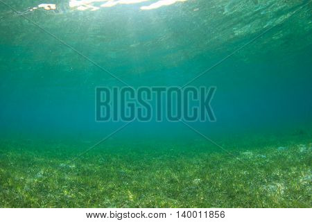 Underwater background in sea with seagrass and sunlight