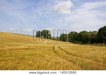 Hillside Barley Fields