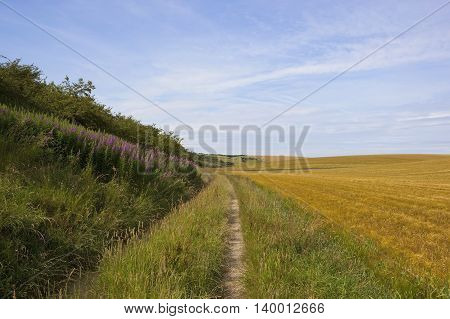 Farm Track With Willowherb