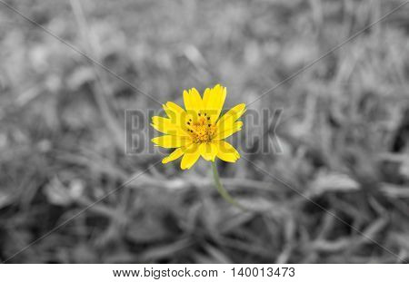 Yellow flowers,Spring background with beautiful yellow flowers
