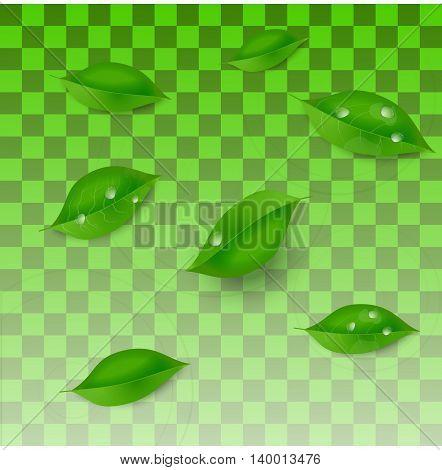 Vector water drops on green leaf macro
