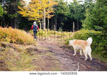 Woman hiking with akita inu dog on forest trail. Recreation and healthy lifestyle outdoors autumn woods in mountains inspirational nature. Fitness and trekking and activity concept.
