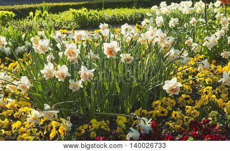 Crown imperial flower in yellow color in multicolor flowerbed with other flowers in the park in spring sunny day