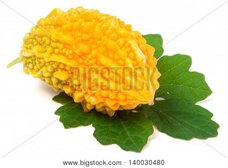 one yellow momordica or karela with leaf isolated on white background.