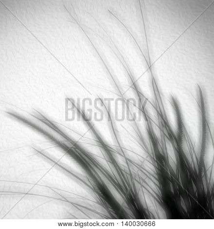 soft blur wild grass black and white abstract on textured background
