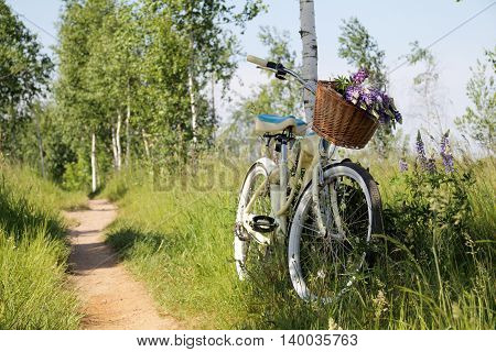 summer landscape with recreational bike and wild flowers in a basket / leisure in nature