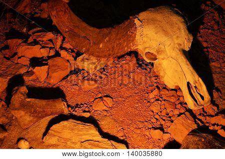 Cráneo de animal sobre la tierra iluminado lateralmente