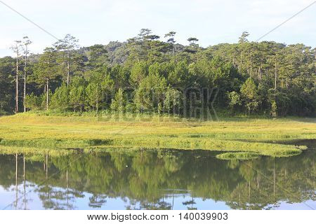 Pine forest and grass field in Dalat