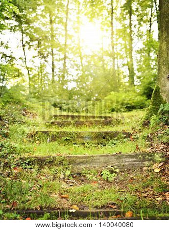 Idyllic forest path with natural steps of wood and golden sunlight with sunbeam. Way to heaven or light at the end of the tunnel. Spiritual path or nature background with copy space.