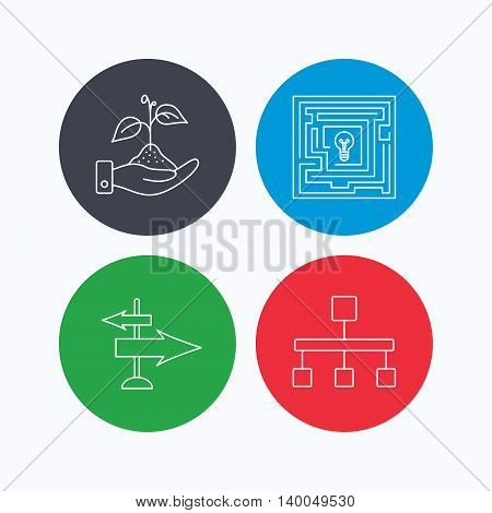 Hierarchy, save nature and direction arrow icons. Maze linear sign. Linear icons on colored buttons. Flat web symbols. Vector