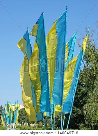 Lot of flags of Ukraine on blue sky background taken closeup.