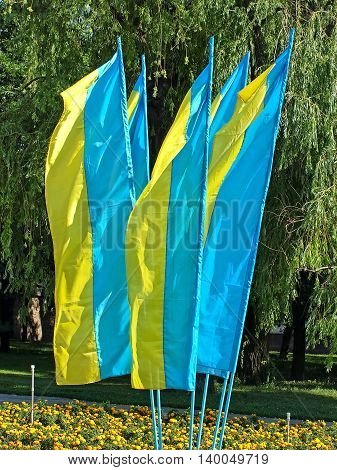 Lot of flags of Ukraine on green trees background.