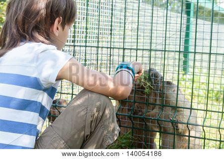 young adorable child boy having fun in zoo, animal park