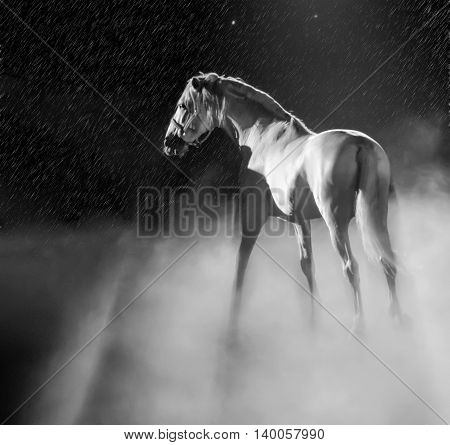 A calm white horse takes a stance amid smoke.