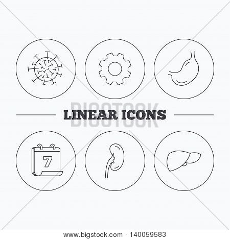 Virus, stomach and kidney icons. Liver linear sign. Flat cogwheel and calendar symbols. Linear icons in circle buttons. Vector