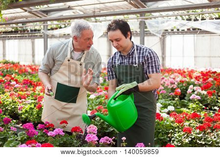 Greenhouse workers watering plants