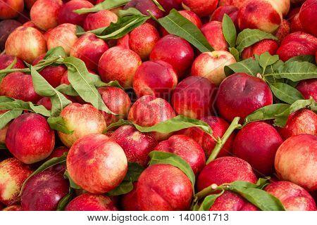Fruit Background, Nectarines / Peaches Fruity