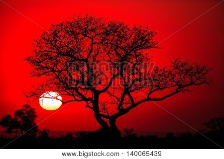 African tree silhouette in the Kruger National Park