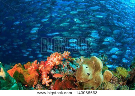 Coral reef and fish school