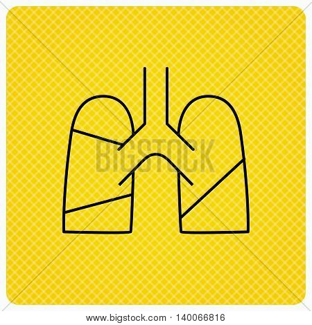 Lungs icon. Transplantation organ sign. Pulmology symbol. Linear icon on orange background. Vector