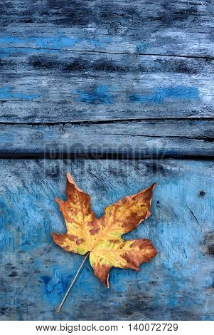 Autumn background with leaf on blue boards