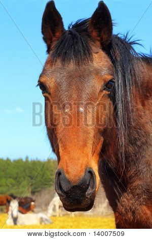 Horse on rural farm
