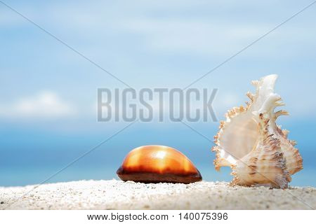 Two beautiful seashells on the white sand of tropical sea beach at sunny day with turquoise water background under blue sky