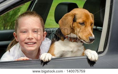 Smilling Girl And Beagle Puppy In Car