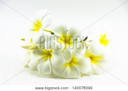 Plumeria flower isolated on white background.The national flower of Laos1