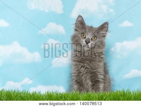 Fluffy gray kitten sitting in tall grass looking straight at viewer with head slightly tilted in a curious fashion blue sky background with clouds. Copy space