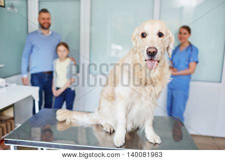 Waiting for vet checkup