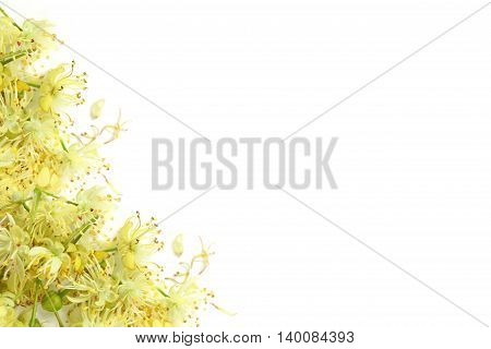 Tilia cordata (flower) - linden on white background.