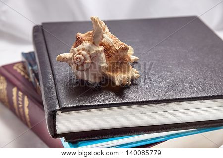seashell on a stack of books background