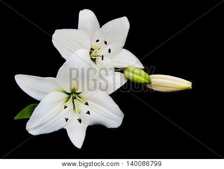 White Lily On A Black