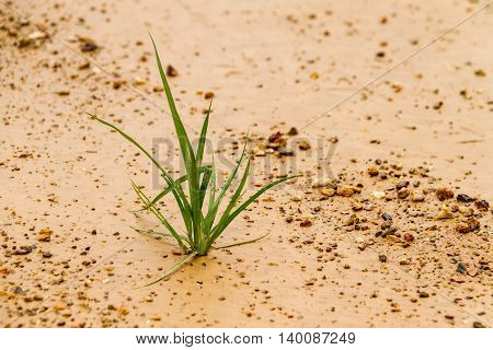 the grass grows up lonely as a business concept starting develop and growing up