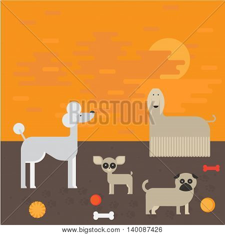 flat dog characters set, cartoon pet animal collection chihuahua, pug and afgan greyhound