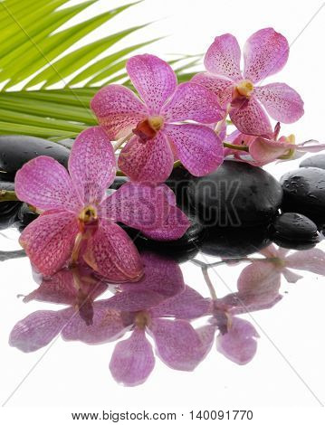 Lying down branch pink orchid and palm with stones