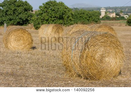 Rolls of haystacks on the field. Summer farm scenery with haystack. Agriculture Concept.