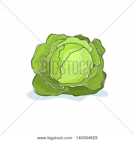 White Cabbage Isolated on White Background, Vegetables Cabbage ,Vector Illustration