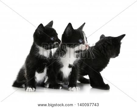 Cute small cats, isolated on white