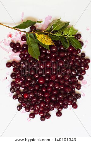 Ripe cherry collected compiled in composition on a white background with a branch of cherry leaves