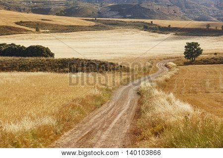 Gravel road in the countryside. Summer landscape. Horizontal
