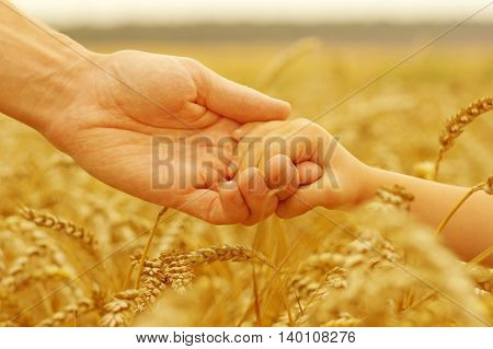 Hands of father and daughter holding each other on wheat field