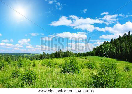 Green meadow with pine trees and blue sky with sun