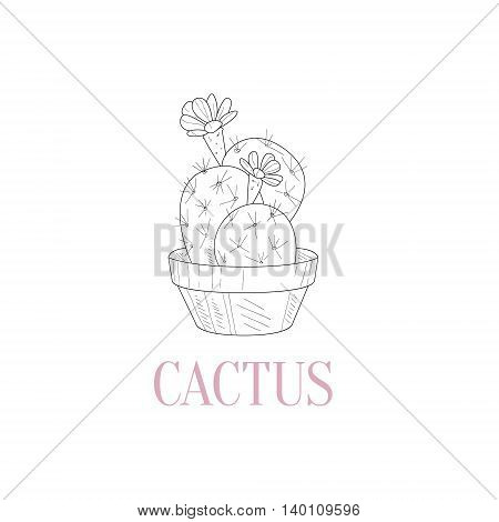 Cactus Home Plant Hand Drawn Realistic Detailed Sketch In Classy Simple Pencil Style On White Background