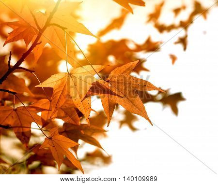 Beautiful autumn foliage in late afternoon lit by sunlight