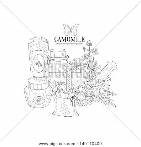Camomile Natural Product Hand Drawn Realistic Detailed Sketch In Classy Simple Pencil Style On White Background