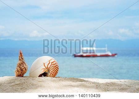 Nautilus and other conch on the white sand tropical beach of turquoise philippine sea with diving boat at sunny day under blue sky