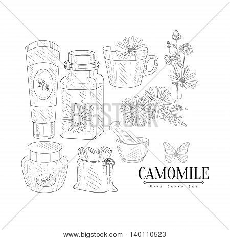 Camomile Cosmetics And Tea Hand Drawn Realistic Detailed Sketch In Classy Simple Pencil Style On White Background
